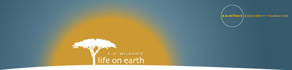 EO Wilson Life on Earth, EO Wilson Biodeversity Foundation